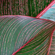 Heliconia Leaf Poster