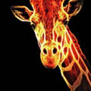 Hello Giraffe Poster