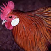 Hen Chicken, Digital Paint Poster