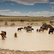 Herd At A Waterhole Poster