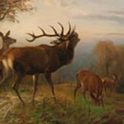 Herd Of Red Deer Poster