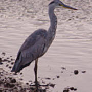 Heron And Grey Water Poster