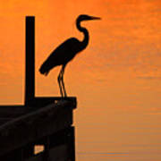 Heron At Sunset Poster