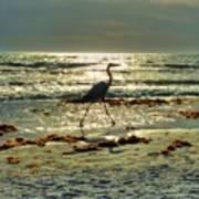 Heron Beachwalk Poster