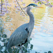 Heron - Beacon Hill Park Poster