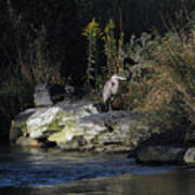 Heron By A Stream Poster