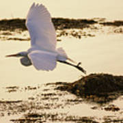 Heron Fly-by Poster