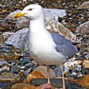 Heron Gull Poster