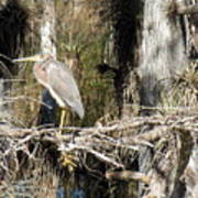 Heron In Everglades Poster