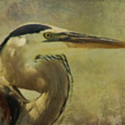 Heron On Texture Poster