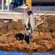 Heron On The Rocks Poster