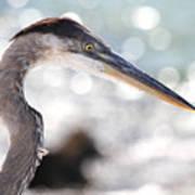 Heron Searching Poster