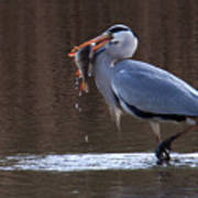 Heron With Perch Poster