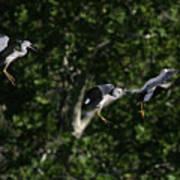 Herons Landing Poster