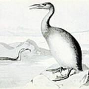 Hesperornis Regalis, Flightless Bird Poster