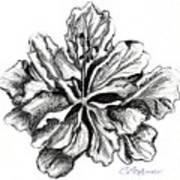 Hibiscus Bloom Poster