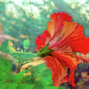 Hibiscus Flame Poster