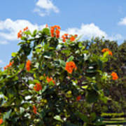 Hibiscus Rosasinensis With Fruit Poster