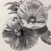 Hibiscus Sketch Poster