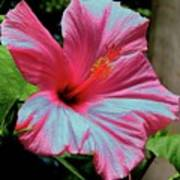Hibiscus With A Solarize Effect Poster
