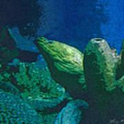 Hidden Eel Poster