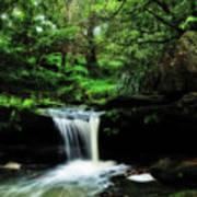 Hidden Rainforest - Painterly Poster