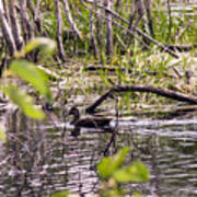 Hide And Seek Ducks Poster