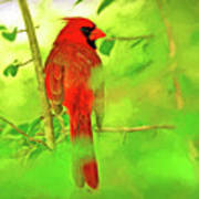 Hiding Behind The Leaves - Male Cardinal Art Poster