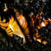 Hiding Tiger Poster
