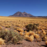 High Altitude Puna Grasslands And Miniques Volcano Chile Poster