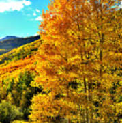 High Country Aspens Poster
