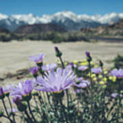 High Desert Wildflowers Poster