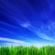 High Resolution Image Of Fresh Green Grass And Blue Sky Poster