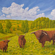 Highland Cattle Pasture Poster