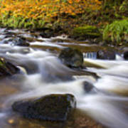 Highland River In Autumn Poster