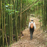 Hiker In Bamboo Forest Poster