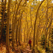Hiking In Fall Aspens Poster
