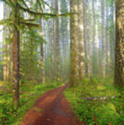 Hiking Trail In Washington State Park Poster