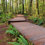 Hiking Trail Wood Walkway In Lynn Canyon Park Poster