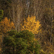 Hillside Autumn Poster