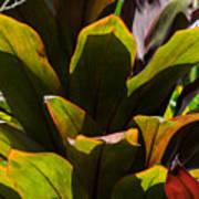 Hojas Verdes Y Rojas Poster