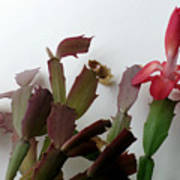 Holiday Cactus 4 Poster