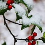 Holly Tree And Snow Poster