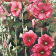 Hollyhocks Along The Fence Poster