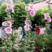 Hollyhocks Taos New Mexico Poster