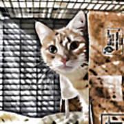 Homeless Cat Poster