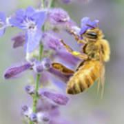 Honey bee 2 Poster