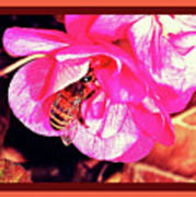 Honey Bee In A Pink Flower Poster