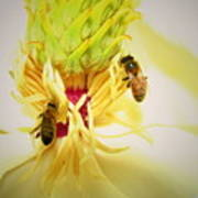 Honey Bees And Magnolia Poster