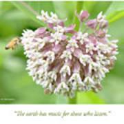 Honeybee And Milkweed Flowers Poster